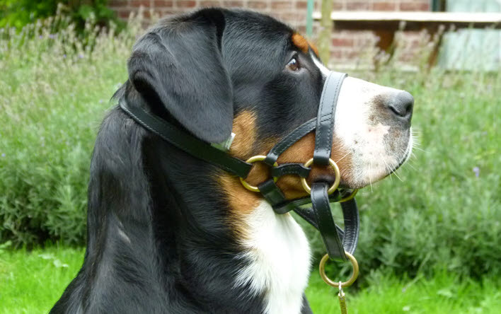 This Dogmatic Headcollar is like a magic tool to me!